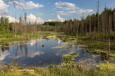 Russia - 29.05.2016 - backwater, swamp