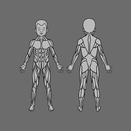 子ども赤ちゃん子供筋肉システム、練習および筋肉のガイドの解剖学.子筋肉ベクター アウトライン アート, 前面と背面します。