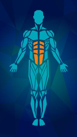 男性の筋肉システム、練習および筋肉ガイドの多角形の解剖学.筋のベクトル アート、フロント ビュー。ベクトル図