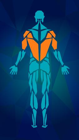 男性の筋肉システム、練習および筋肉ガイドの多角形の解剖学.筋のベクトル アート、背面図。ベクトル図