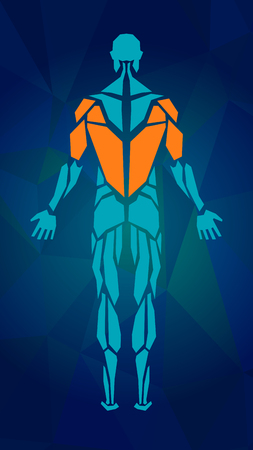 Polygonal anatomy of male muscular system, exercise and muscle guide. Human muscle vector art, back view. Vector illustration