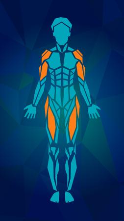 女性の筋肉システム、練習および筋肉ガイドの多角形の解剖学.女性筋のベクトル アート、フロント ビュー。ベクトル図