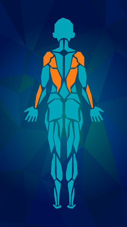 女性の筋肉システム、練習および筋肉ガイドの多角形の解剖学.女性筋のベクトル アート、背面図。ベクトル図  イラスト・ベクター素材
