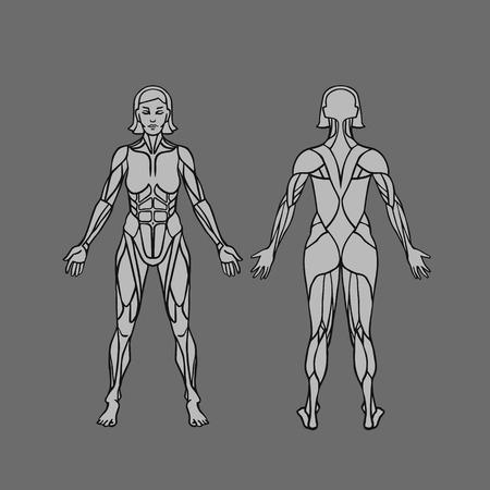 女性の筋肉システム、練習および筋肉ガイドの解剖学.女性筋肉ベクター アウトライン アート, 前面と背面します。ベクトル図