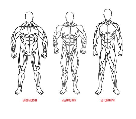 Men body types diagram with three somatotypes vector illustration. Ectomorph, mesomorph, endomorph black outline silhouettes front view. Vector illustration eps10