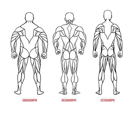 Men body types diagram with three somatotypes vector illustration. Ectomorph, mesomorph, endomorph black outline silhouettes back view. Vector illustration eps10 Çizim