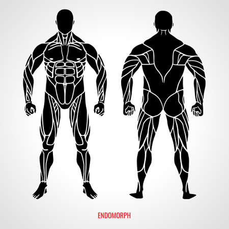 Body Type Endomorph. Front and back view. Vector illustration