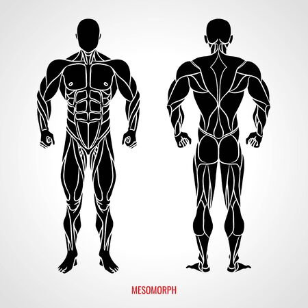 Body Type Mesomorph. Front and back view. Vector illustration