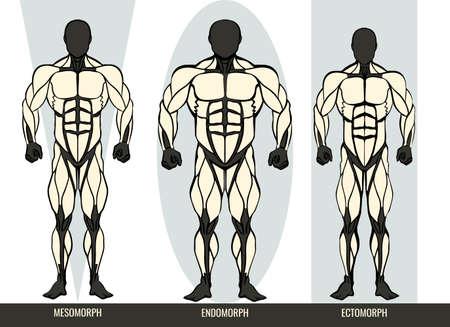 Men body types diagram with the three somatotypes Ectomorph, Mesomorph and Endomorph Çizim