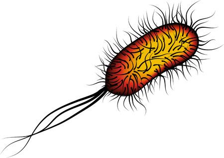 pathogen: Las bacterias E. coli aisladas de color rojo sobre fondo blanco Vector ilustraci�n