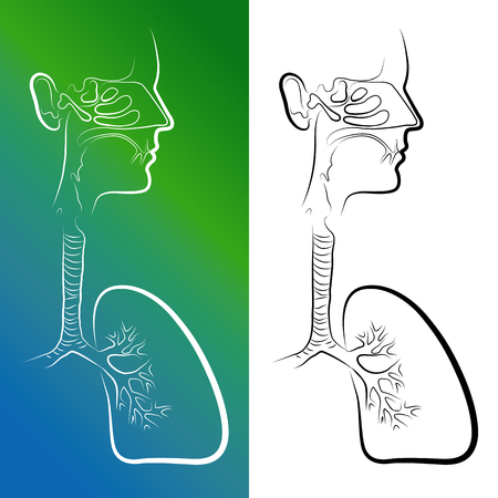 cilia: Sketch of Respiratory System Organs. Vector Illustration. Isolated on white background Illustration