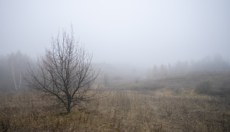 The skeleton tree on the background of the morning fog in autumn