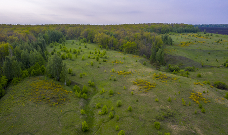 Sunset over the forest and ravine with flowering yellow flowers shrub from a birds eye view.