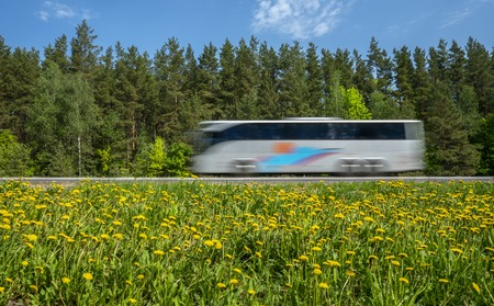 Tourist bus rushes along the road along the forest, the roadside is covered with yellow dandelions Zdjęcie Seryjne