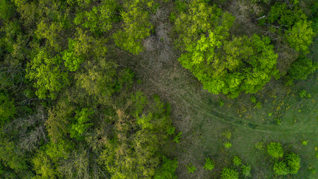 The road leading to the forest photo with a quadcopter drone. Zdjęcie Seryjne