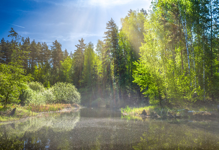 On a spring morning on a forest lake, fog and sunlight make a magnificent landscape.