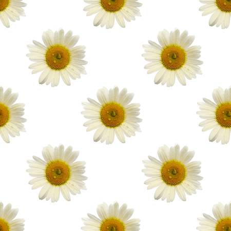 repeating pattern of chamomile flower covered with raindrops on white background. Zdjęcie Seryjne