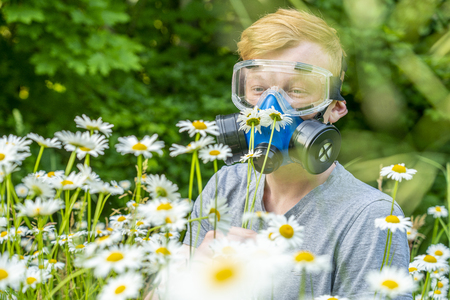 a person with allergies in a respirator and goggles sniffs chamomile in a meadow Zdjęcie Seryjne