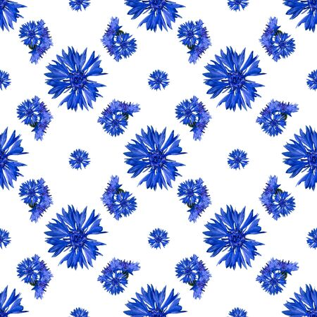 seamless pattern of cornflower flowers on white background.