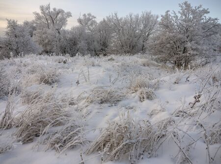 Winter landscape grass and trees in snow Stock Photo