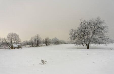 Winter landscape, tree snow field