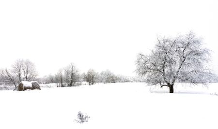 Winter landscape, tree snow field Stock Photo - 129914444