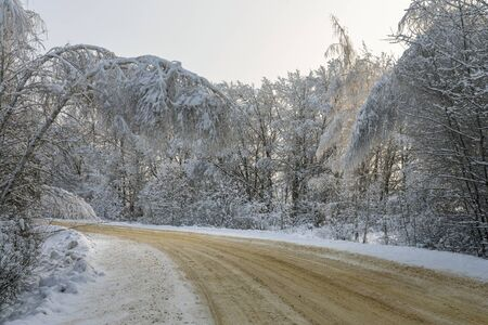 Turn of a winter road Birches bent under the weight of snow