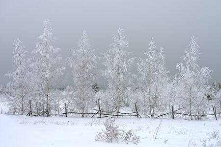Winter landscape, snow-covered birch trees on the background of snow clouds, great view