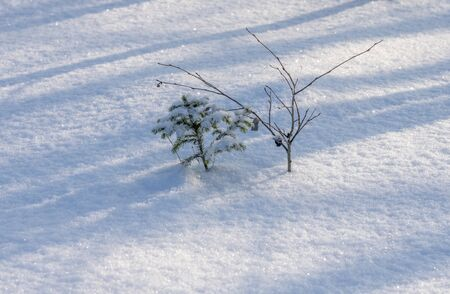 Sticking out of the snow and snow fir tree.