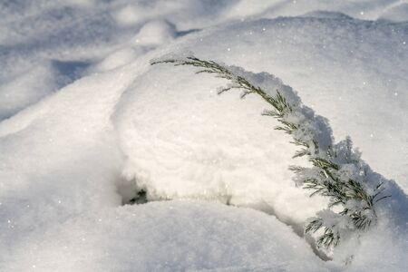 Huge snowdrifts, which sticks out from under the sprig of juniper.