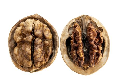 Two open walnuts in a shell , a good walnut and a spoiled walnut, isolate on a white background.