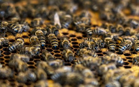 close up of a honeycomb filled with honey bees continuing to bring honey.
