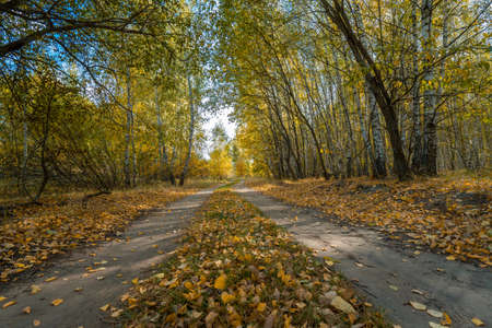 Dirt road covered with fallen leaves leading through the autumn forest