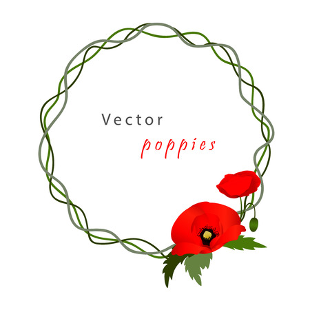 florescence: Vector white background with red flowers poppies