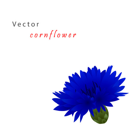 bluet: Template card for greeting invitation, wedding, birthday, Easter with cornflower
