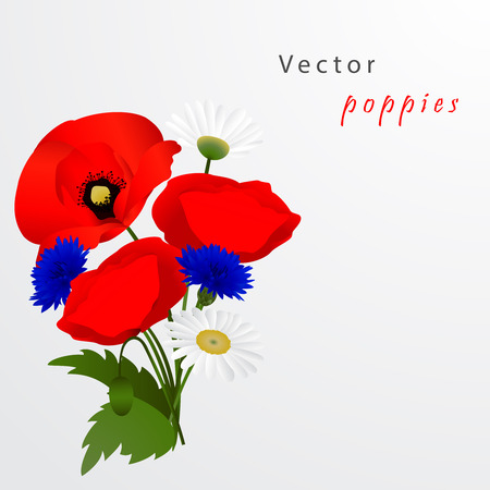 fields of flowers: Vector white background with chamomile, cornflowers and red flowers poppies