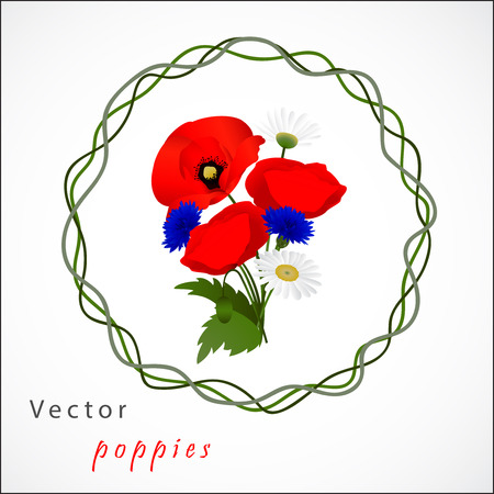 cornflowers: Vector white background with chamomile, cornflowers and red flowers poppies