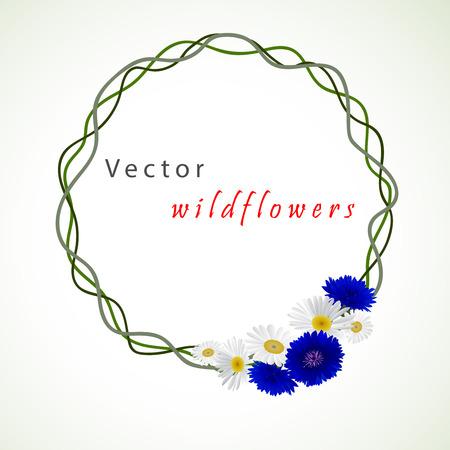 cornflowers: Vector white background with flowers chamomile, cornflowers Illustration