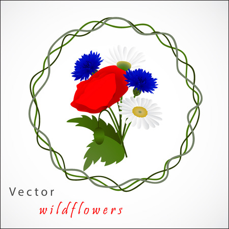 cornflowers: Vector white background with flowers chamomile, cornflowers and red poppy Illustration