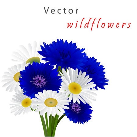 cornflowers: Template card for greeting, invitation, wedding, birthday, Easter with flowers chamomile and cornflowers Illustration