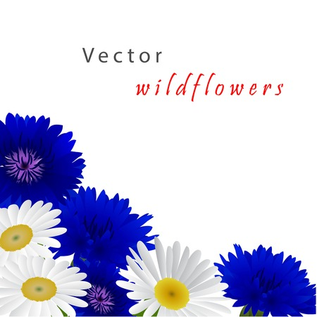 bluet: Template card for greeting, invitation, wedding, birthday, Easter with flowers chamomile and cornflowers Illustration