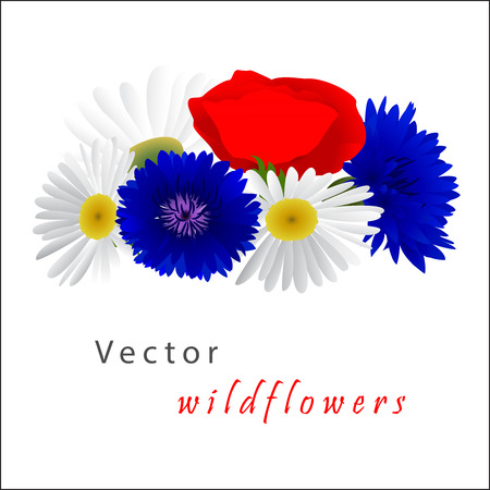 bluet: Vector white background with flowers chamomile, cornflowers and red poppy Illustration