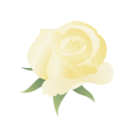 yellow rose: Floral background with yellow rose. May be used as packing Illustration