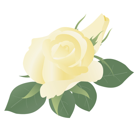 yellow roses: Floral background with yellow roses. May be used as packing