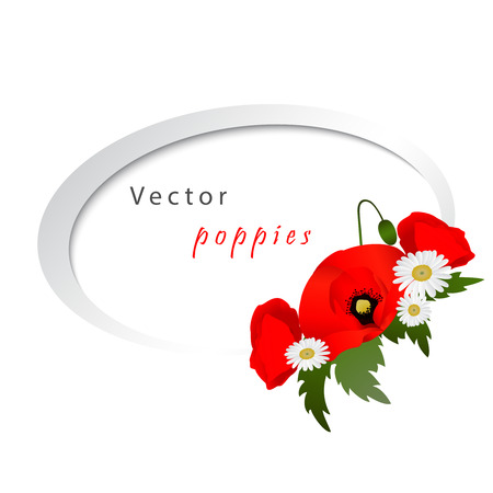 white background with chamomile and poppies Stock Photo