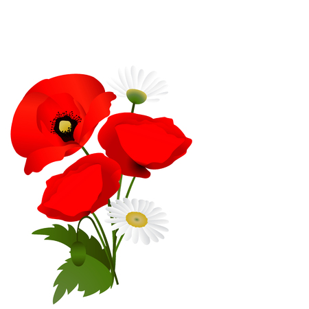 white background with poppies