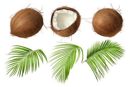 Coconut realistic vector illustration, whole and half cracked broken coco nut with green palm leaves, isolated on white background. Set for ads or packaging design natural food and organic cosmetics.