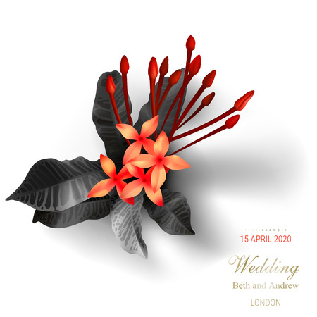 Tropical black leaves, scarlet buds on white background vector ads poster Beautiful botanical design with golden tropic jungle leaves, exotic red flowers Wedding ceremony invitation card, holiday sale Ilustrace