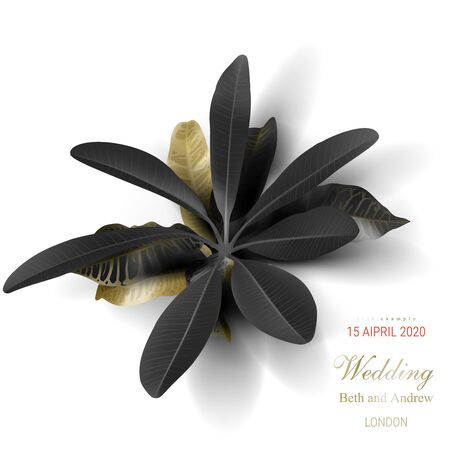 Tropical black and gold leaves on white background vector poster. Beautiful botanical design with golden tropic rainforest jungle leaves, exotic plants for invitation, greeting cards or sales banners