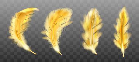 Conjunto realista de vector de plumas esponjosas de color amarillo dorado aislado sobre fondo transparente. Plumas de oro de alas de pájaros o ángel, símbolo de suavidad y pureza, elemento de diseño